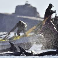 n-dolphins-a-20160513-200x200.jpg