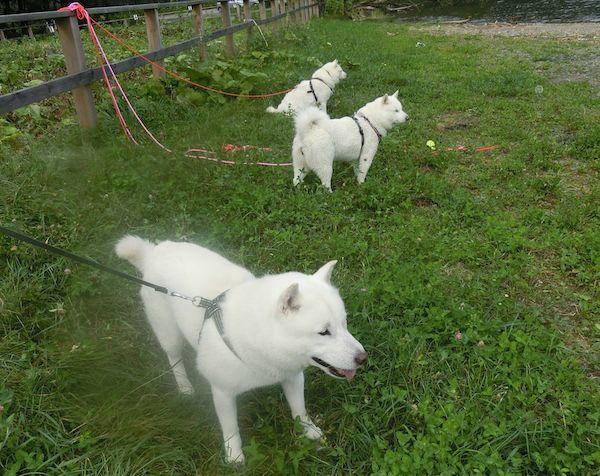 2016.9.2 支笏湖4