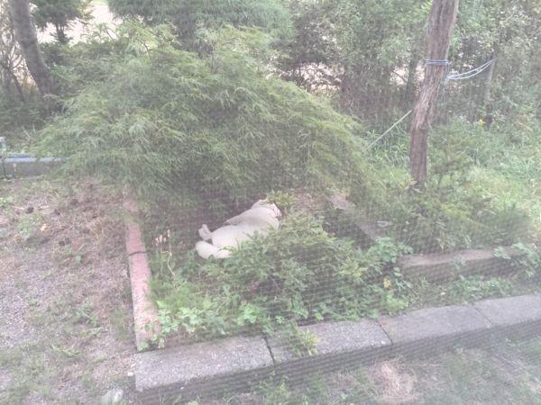 2016.9.4 空知・庭