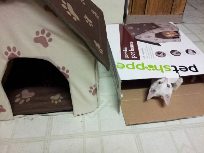 cat-gift11.jpg