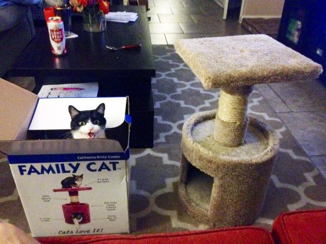 cat-gift14.jpg