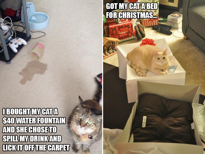 cat-gift15.jpg