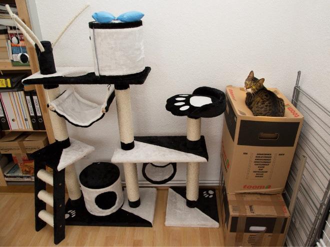 cat-gift16.jpg