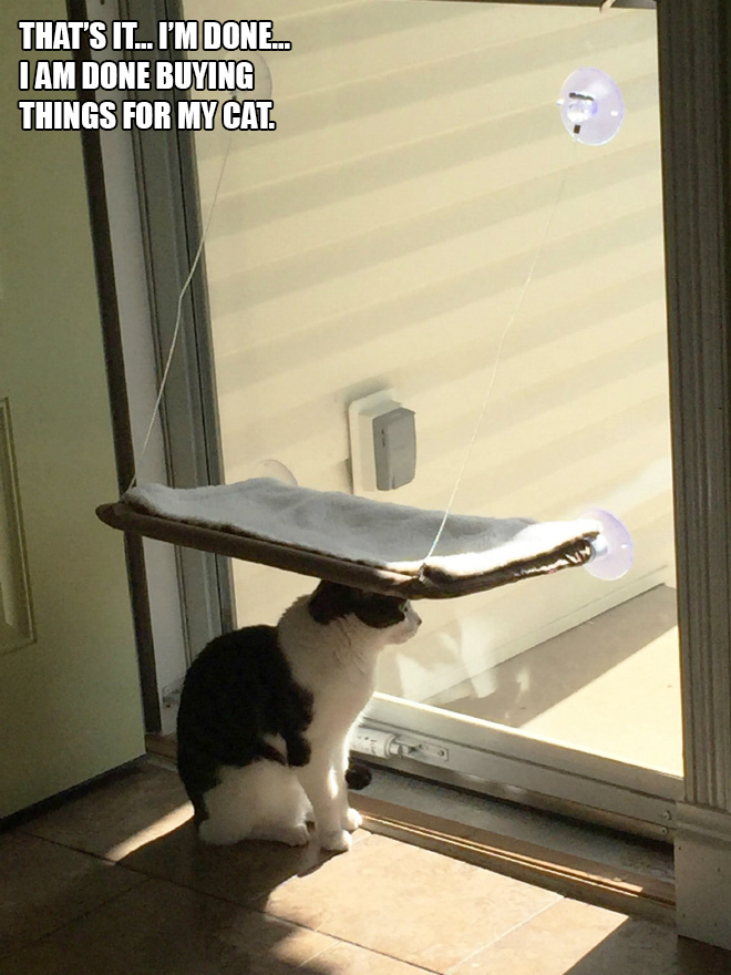 cat-gift17.jpg