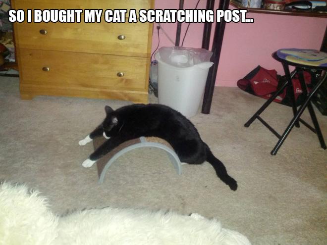 cat-gift5.jpg