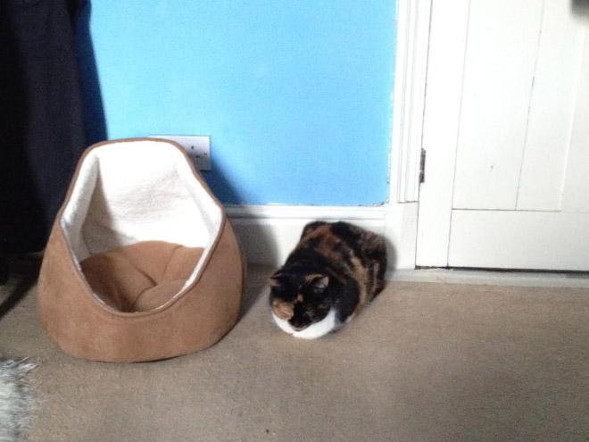 cat-gift7.jpg
