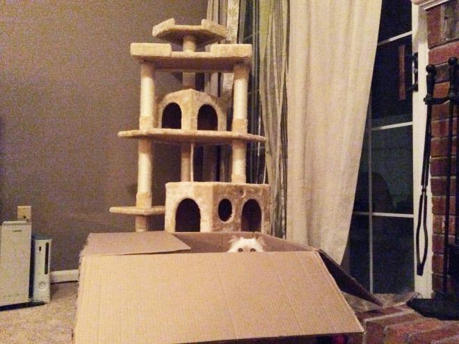 cat-gift8.jpg