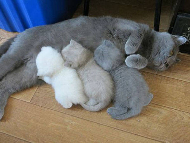 even_cats_can_be_proud_parents_to_their_offspring_640_18.jpg