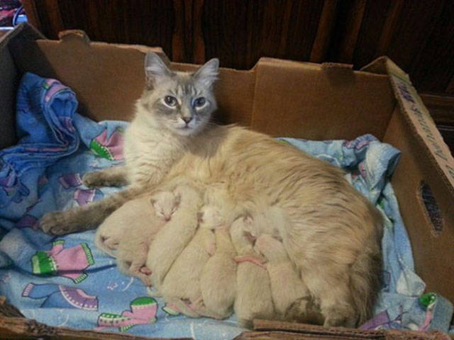 even_cats_can_be_proud_parents_to_their_offspring_640_24.jpg