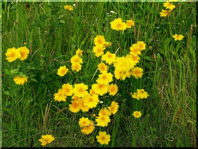 空き地の花