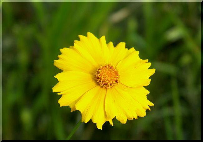 空き地の花2