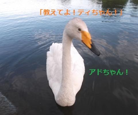 DSCF1011_convert_20160814164438.jpg
