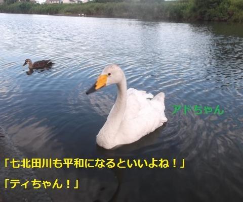 DSCF1014_convert_20160815090213.jpg