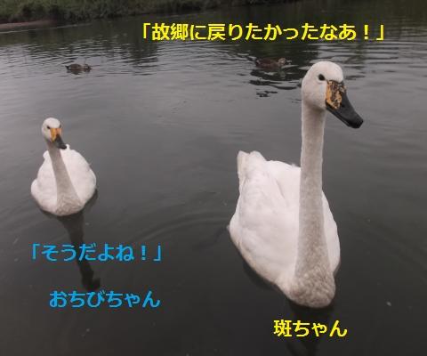 DSCF2583_convert_20160915133530.jpg