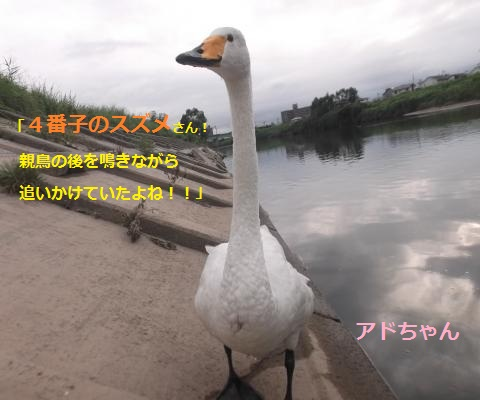 DSCF2584_convert_20160915133714.jpg
