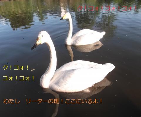 DSCF7582_convert_20160603074841.jpg