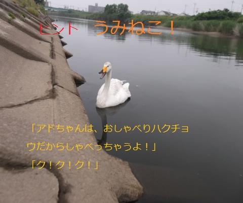 DSCF8785_convert_20160612175323.jpg