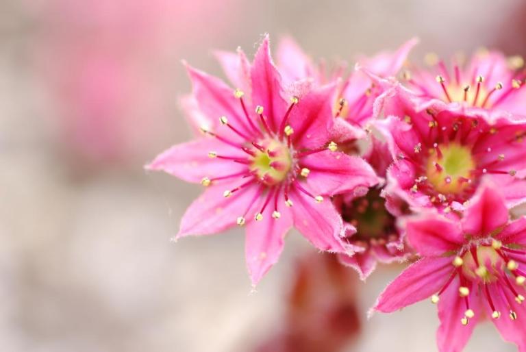家の前の花です