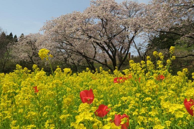 2016.05.03 松前公園
