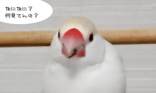 ピノしゃん気付け!と山の鳥_1
