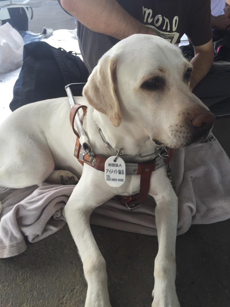 盲人マラソン犬