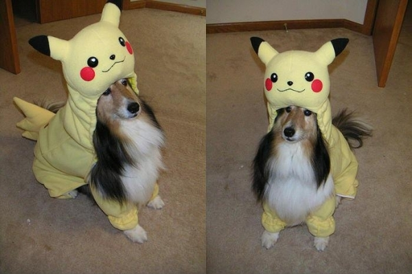 Halloween_dog_003.jpg