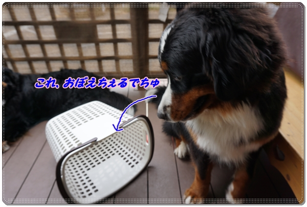 2016-5これおぼえちぇるでちゅ