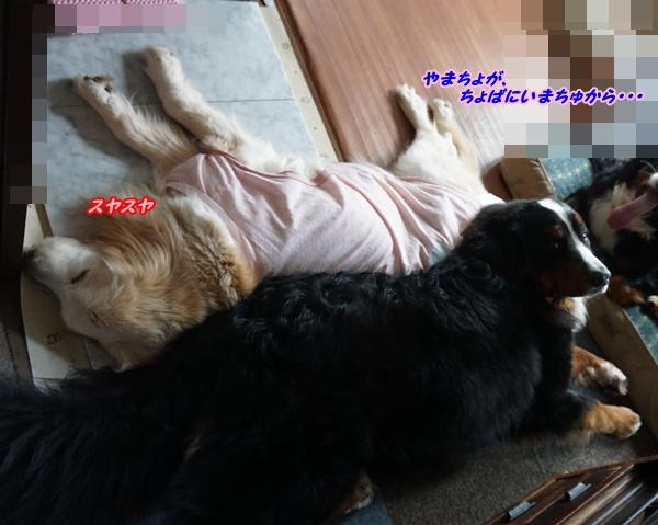 2016-5やまちょがいまちゅ