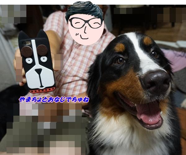 2016-8やまちょとおなじでちゅ