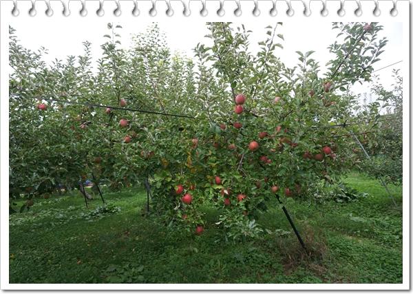 2016-10リンゴちゃんがいっぱい