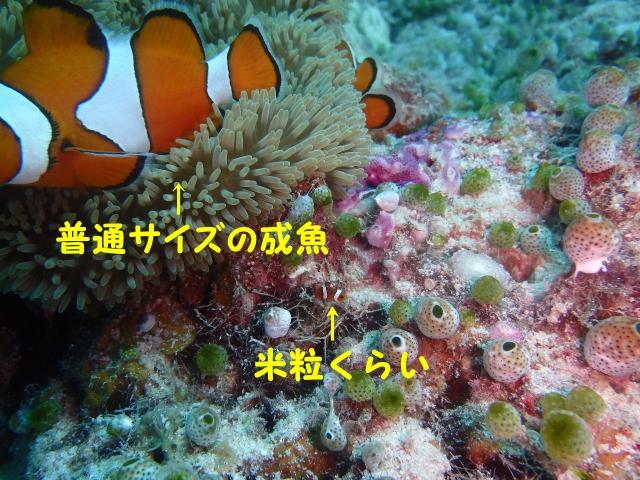 2016_05190073b.jpg