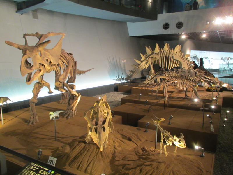 恐竜博物館08