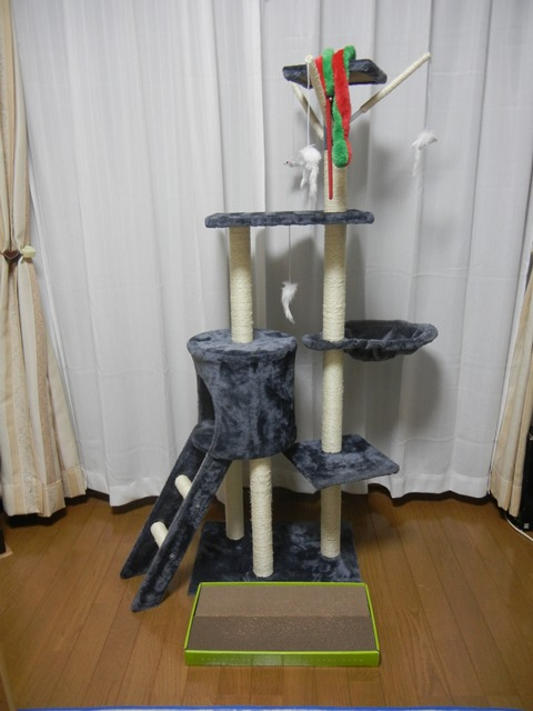 cat_tower160904.jpg