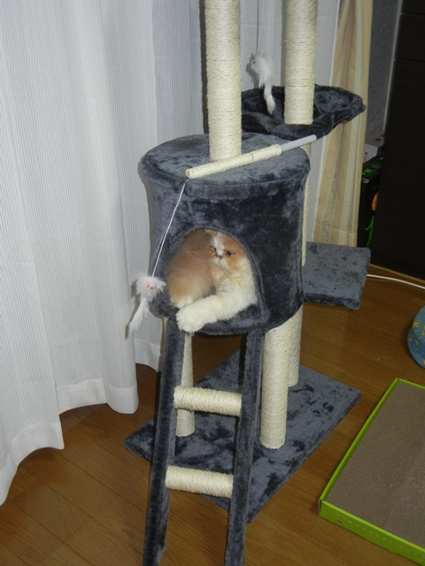 cat_tower160904a.jpg