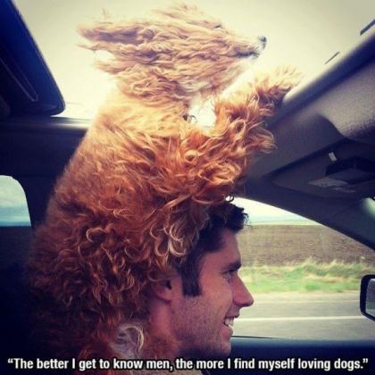420x420人間を知れば知るほど、犬を愛するようになる。