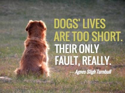 420x313犬の一生はとても短い。唯一の欠点が、まさにそれである。