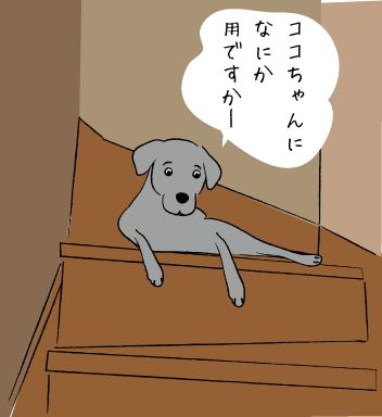階段にいるラブラドール