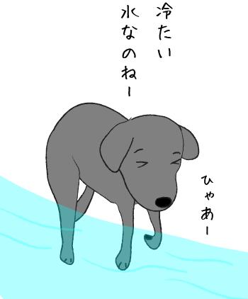 水遊びをするラブラドール