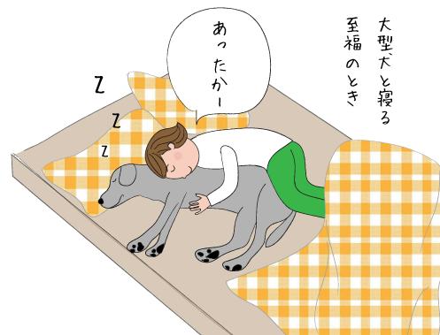 ラブラドールと眠る