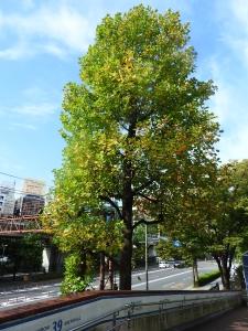 木々も色づき始めて。