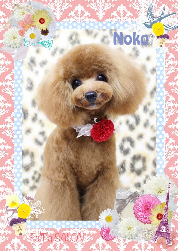 ノコちゃん4-1
