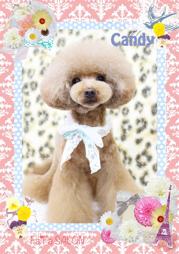 キャンディちゃん4-1
