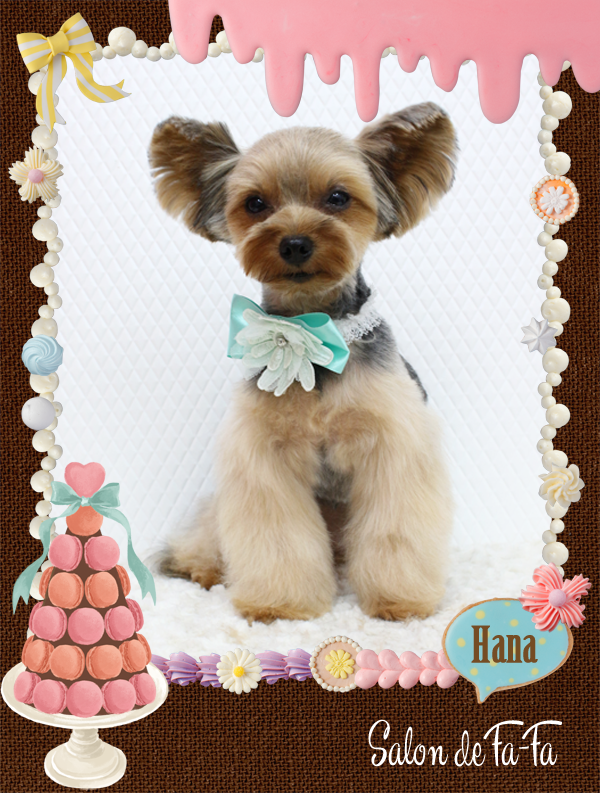 HANAちゃん8-1