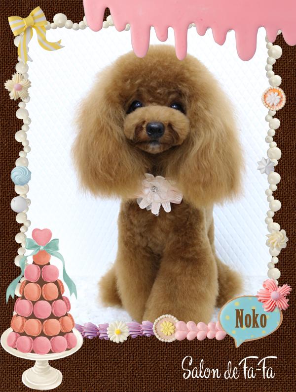 ノコちゃん8-1
