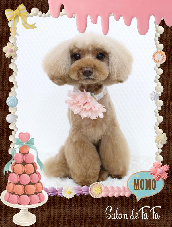 MOMOちゃん8-1