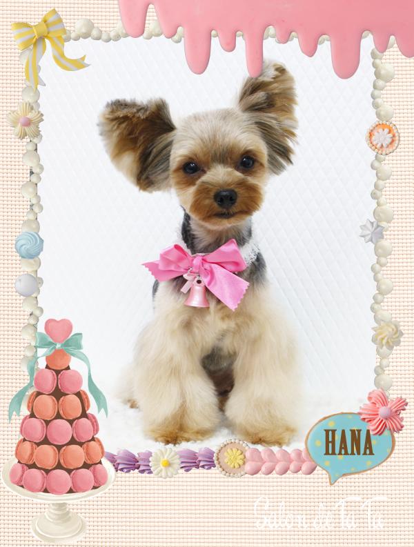 HANAちゃん8-2