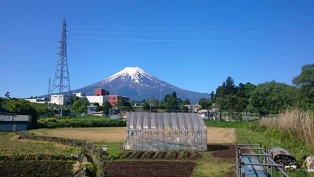 現地の富士山