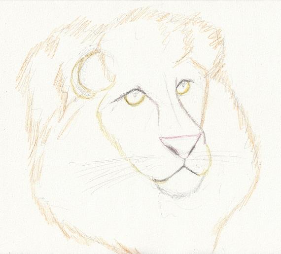 ライオン 今日ものんびりと 2016/05/22