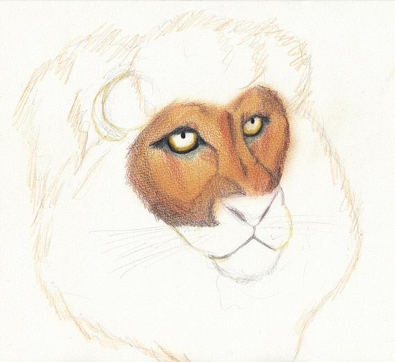 ライオン 今日ものんびりと 2016/05/23
