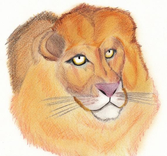 ライオン 今日ものんびりと 2016/05/26